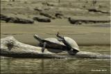 turtoise.jpg