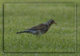 Birds of Sweden