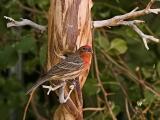 Red Bird_filtered.jpg
