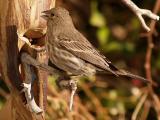 Sparrow 1.jpg