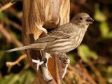 Sparrow 3.jpg