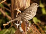 Sparrow 4.jpg