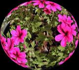 UZI Spherized- Flowers In A Pot