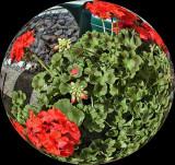 UZI Spherized- More Flowers In A Pot