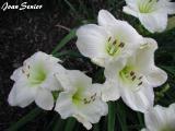 Joan Senior.jpg