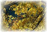 Fall Yellow.JPG