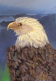 Lonely Eagle.jpg