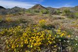 Spring in Joshua Ntl Park_329.jpg