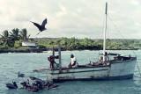 Fishing Boat, Academy Bay, Galapagos