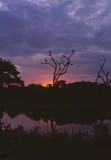 Maribu Storks, Sri Lanka Sunset