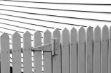 Lucy's Fence
