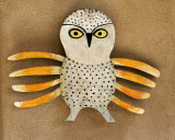 Rare New Mexico Spotted Owl