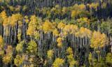October's Aspen Above Taos