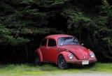 Pescadero's Red Bug