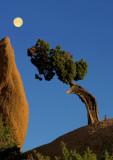 Moon & Juniper