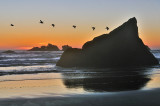 Pelicans over Bandon Beach