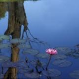 LilyPond80c.jpg