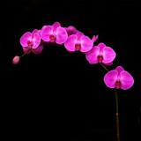 Orchids1810A004-600.jpg