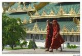 Moines Birman
