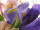 Iris and Lillies