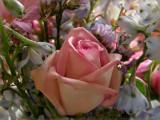 Rose in Blue Stars
