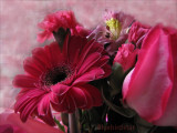 Red Roses and Gerberas