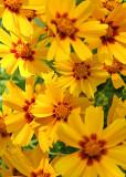 Sunny Flowers
