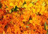 Orange Market Flowers