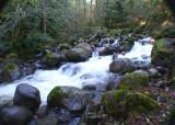 56 Rain Forest Creek