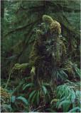 41 Forest Spirits