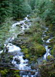 40 Moss Creek Forest