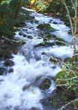 37 Creek
