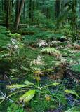 35 Rainforest Wetland