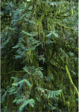 33 Healing Green