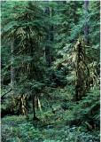 30 Forest Spirits 2