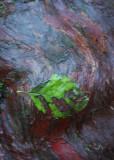 20 Trunk, Leaf
