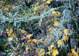 11 Lichen and Fall Leaves