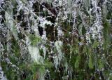 10 More Lichen on Branches