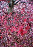 32 Branch Leaves, Fallen Leaves