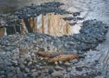 Winter Salmon Stream