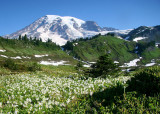 43 snow lilies