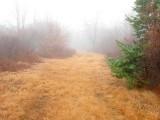 Foggy Woodland Trail