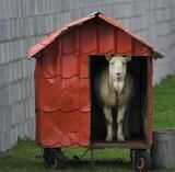 A strange dog in a strange kennel