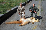 Dead_Squirrel.jpg