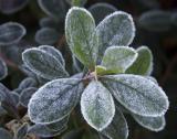 Hal Muhrlein: Morning Frost