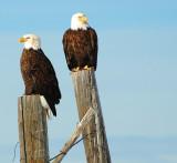 pinedale eagles.jpg