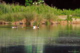 Pond -17