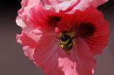 Bee 07