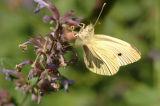 Butterfly from Jardin Bagatelle