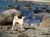 Suki on the Beach.jpg